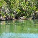 Croc on River