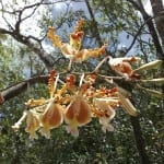 Crocodile Creek orchids