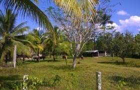 Horse Farm in Belize Mountains