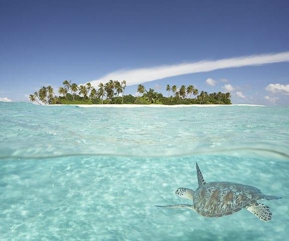 Hawksbill Turtle !